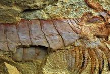 Fossils & Evolution