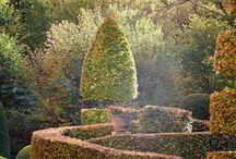 Plant_Hedges