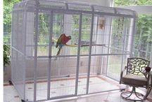Voliere pappagalli