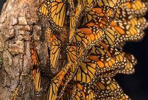 Perhoset