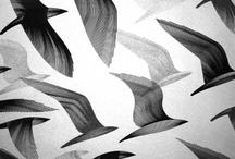 bird illustrations
