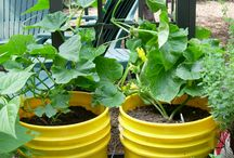 Organic Gardening Container Gardening