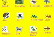 Top 20 Insects in the World