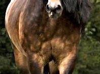 ❤️ hästar ❤️
