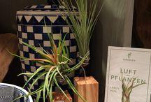 EVRGREEN.de meets Labert Berlin / Luftpflanzen als lebendiges Dekoelment