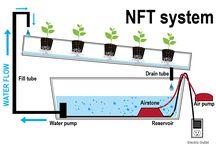 Saláty nft system