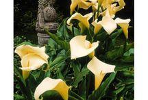 Heritage Gardens of Kilmokea