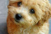 Σκυλιά και κουταβάκια