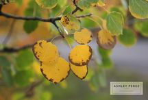 Ashley Perez Photography Blog