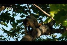 CERRADO - BRASIL / A vida do cerrado. Fauna e flora.
