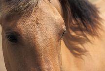 Le cheval en image / Méli, melo de photos de chevaux de toutes tailles et de toutes races.