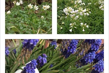 flowers & plants / Spring wild flowers