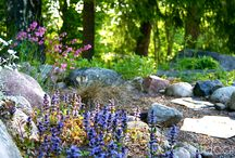 Kivikko / Stone Garden / Kuivalle hiekkapohjalle perustettu kivikko, josta löytyy sulassa sovussa puutarhan ja luonnon kasveja.