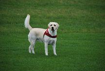 Tips para Mascotas / Tips para mascotas, Tips para dueños de un perro, Tips para Dueños de Un Gato, Tips para Dueños de un Cuyo.