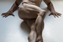 male anatomy refs