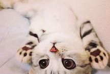 gatinhos fofinhos