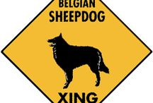 Belgian Sheepdog Signs and Pictures / Warning and Caution Belgian Sheepdog Signs. https://www.signswithanattitude.com/belgian-sheepdog-signs.html