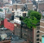 Amazing Green Roof Images