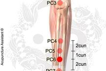 acupunctuur, anatomie, triggerpoints / behandeling met acupunctuur