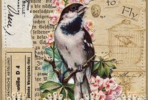 Card Designs ~ Collage / by Colleen Madsen