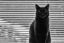 """"""" BLACK  CATS """""""