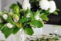 flowers &plant