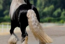 Horses / by Sandie Fornaby