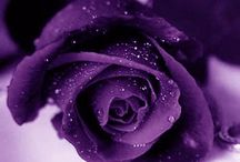 The Color Purple / All things purple...Mom's favorite color