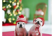 Christmas animals!