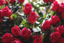 Flower Shops in Delhi to Send within 4 Hours