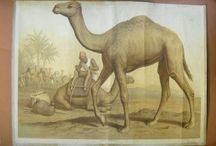 Stampe antiche - Antique Prints / #antiquariato #antique