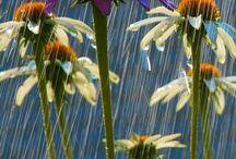 rain....