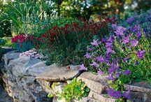 skalky a záhony / osázení suchých zídek a skalek