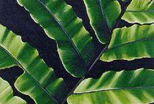 Plants - Ferns/Tree Ferns