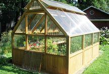Greenhouse / Drivhus