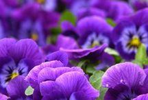 Flora world!