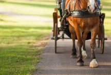 Vacation Getaways with Horses