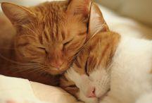 Redish Cats / gatos loiros, vermelhos, ruivos,ginger...