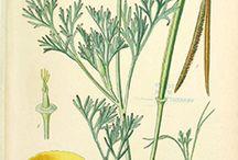 #Beautifulmedicine #Botanical