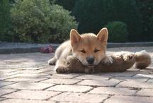 De Allerliefste hond Sjeng