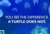 Conservation / Tips and information on being more environmentally friendly to our oceans. What do we need to protect? What are the issues? How can we help?