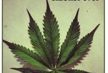 Weed cannibis marajuana / Stoner smoker midnight toker