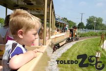 Rides / From the Safari Express to the historic carousel, rides add to the fun of your Zoo visit.