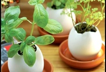 Ideas / Crafts, Gardening, Life Hacks, Gift Ideas / by Adriane Jones