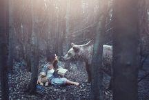 projekt s vlky