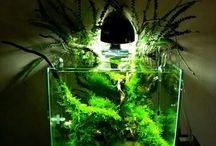 Нано аквариумы / Лучшие наноаквариумы, фото и видео
