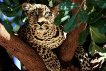 SGC - Stunningly Gorgeous Creatures