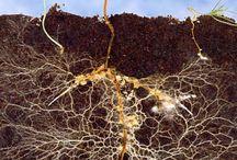 soil microbiome
