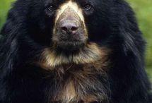 Bears :3