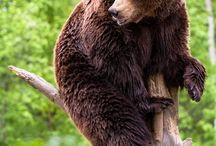 Bears / by StudioWagle